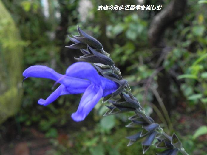 medo-se-ji2_20130810094443f51.jpg