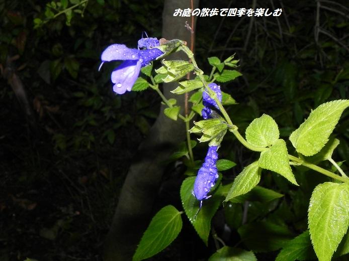 medo-se-ji6_20130825102633bdf.jpg