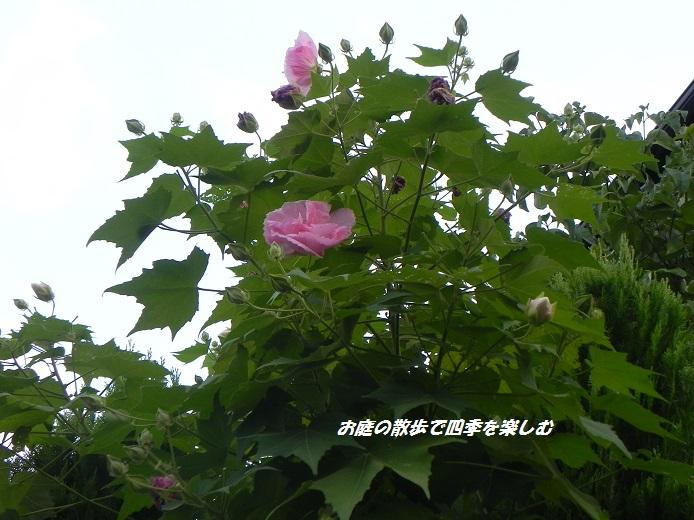 suihuyou_20130909202907b83.jpg