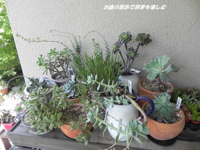 taniku_20130624201351.jpg