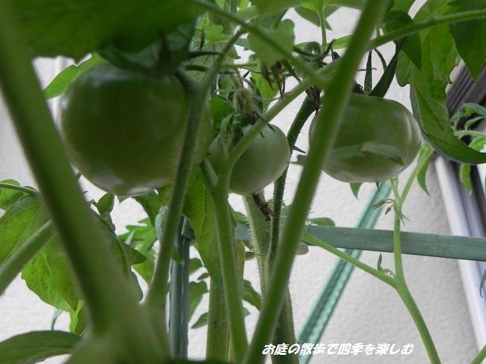 tomato6_20130708203550.jpg