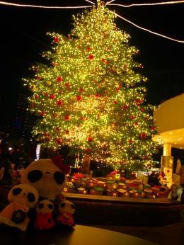 横浜ベイクォーターのクリスマスツリーとぱんファミ