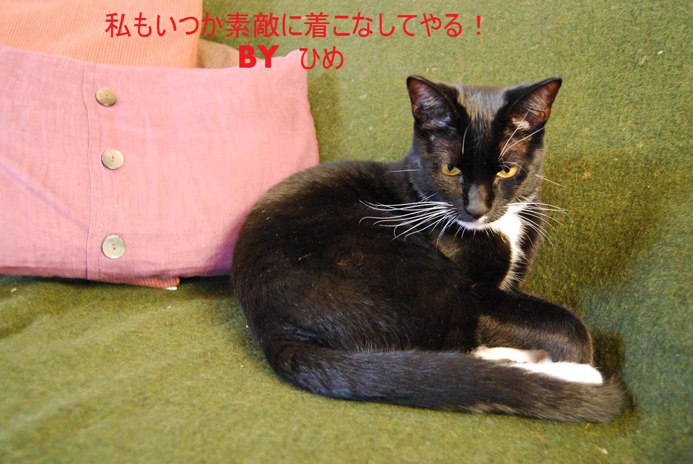 ひめち9DSC_0410