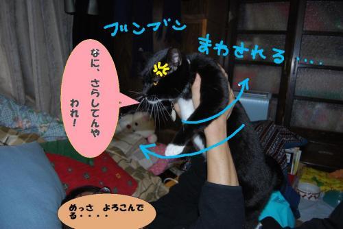 DSC_0050 (2)