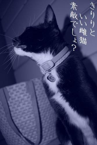 CSC_0072.jpg
