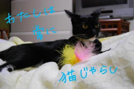 DSC_0365_20071021104404.jpg
