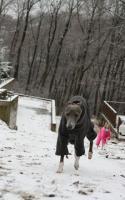 ドーニ雪遊び