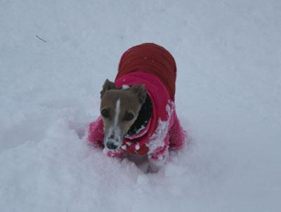 雪でうん◎