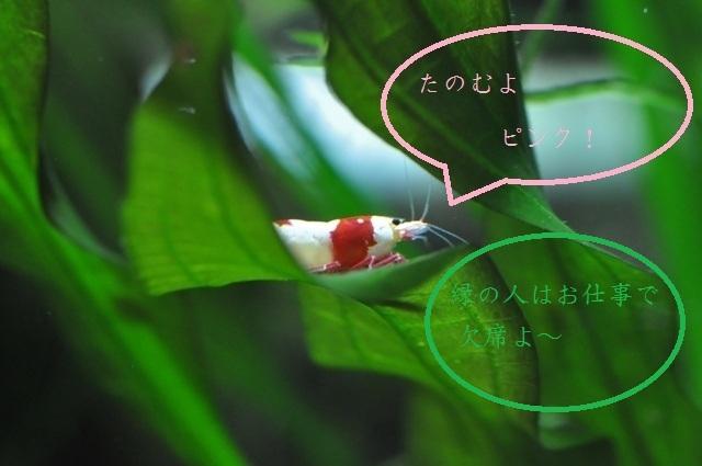 yuzuebi_20120219095837.jpg