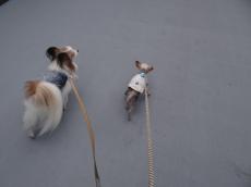 ひたすら歩く2匹