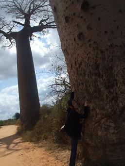 baobab4