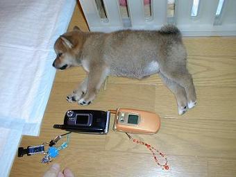 携帯くらべっこ
