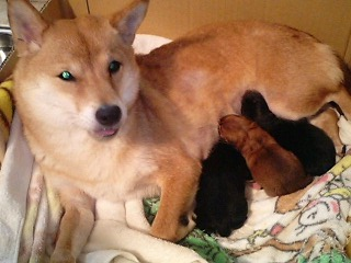 3匹のママ