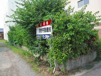 刈りこみ (2)