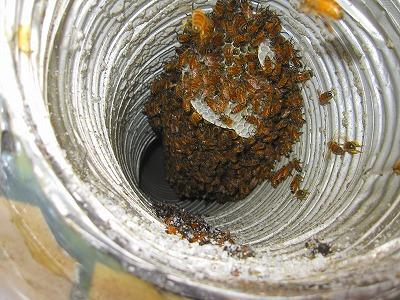 エクセレント上小田井 蜂の巣