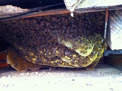 ミツバチ (4)