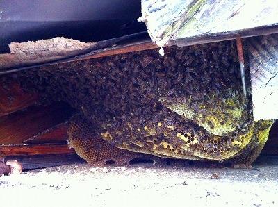 ミツバチ (2)
