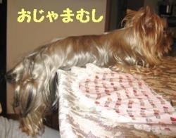 20061006141359.jpg