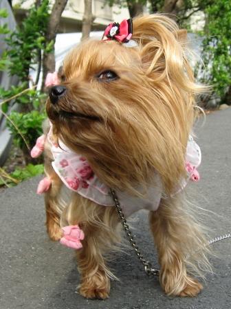 風がなま暖かい