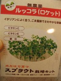 ルッコラ栽培キット
