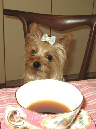 コーヒータイムふらんちゃん