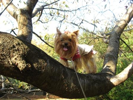 木登りひな