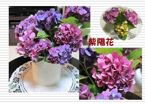 aji_20110727211829.jpg