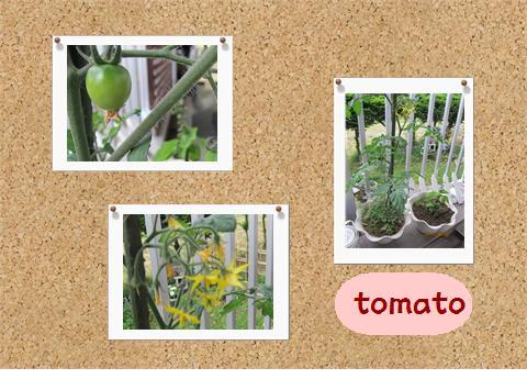 tomato_20110620090737.jpg