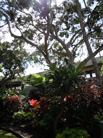 Honolulu_2.jpg
