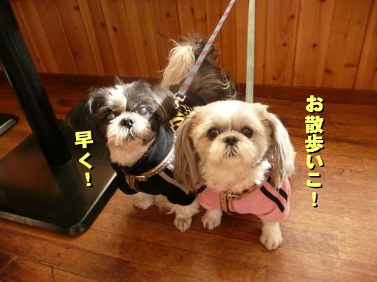dogcafe12.jpg