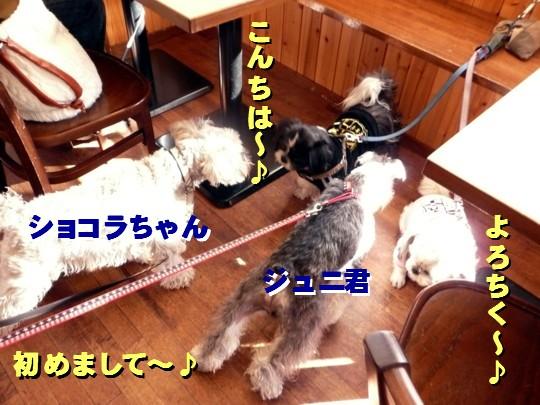 dogcafe13.jpg