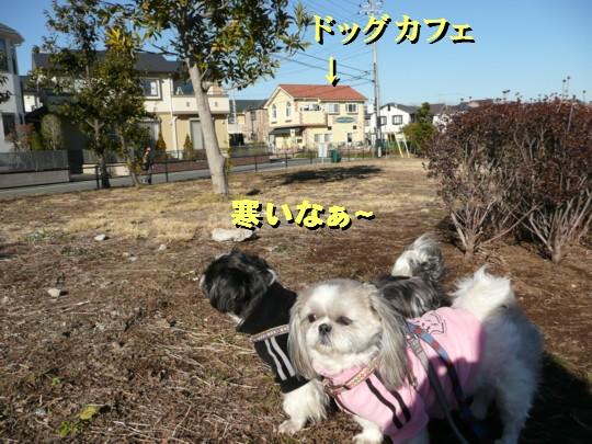 dogcafe14.jpg