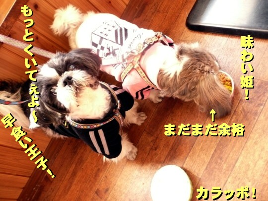 dogcafe7.jpg