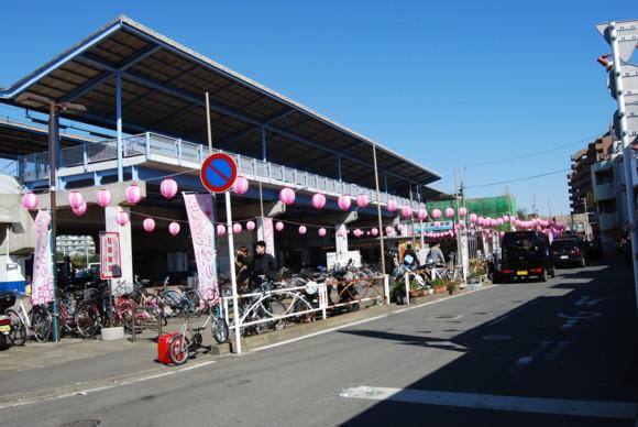 miurasakura1.jpg