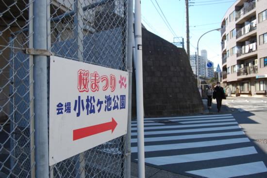 miurasakura4.jpg