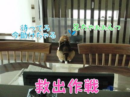 20110906_04.jpg