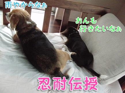 20110906_06.jpg