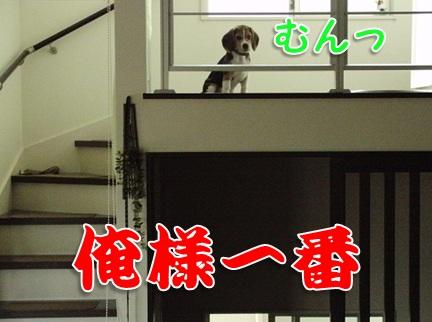 20110906_07.jpg