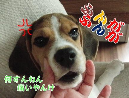 20110906_10.jpg