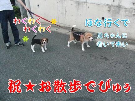 20110912_02.jpg