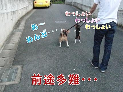 20110912_03.jpg