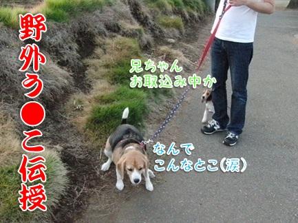 20110912_09.jpg