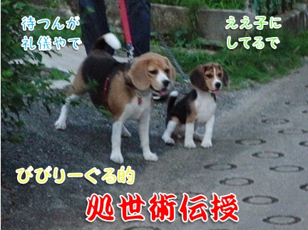 20110912_10.jpg