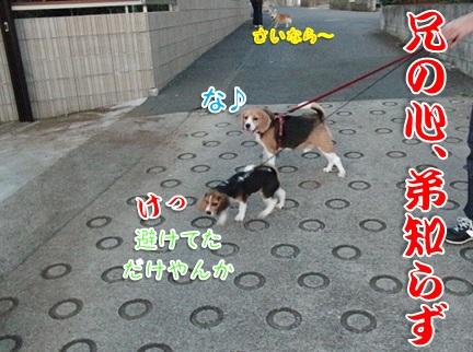 20110912_11.jpg