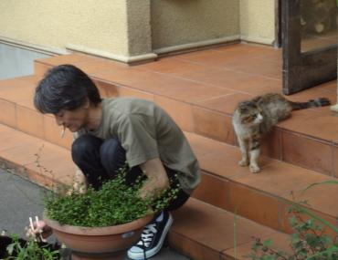 猫まっしぐら
