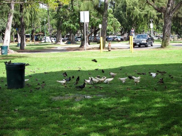 カピオラニ公園の鳥