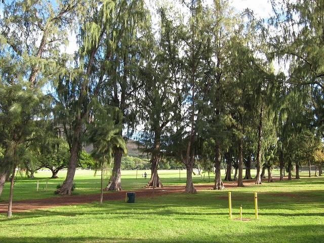 カピオラニ公園のアイアンウッド
