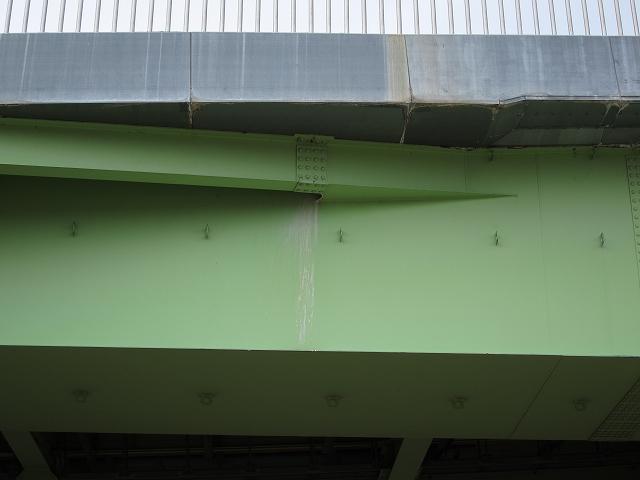 チョウゲンボウ橋に営巣