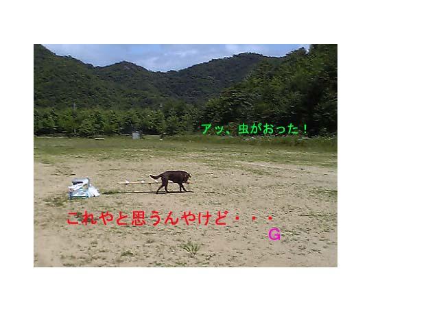 20070612024855.jpg