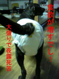 20070709002501.jpg